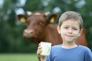 mleko od krowy na ser